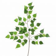 Branche de bouleau artificielle NIKOLAJ, vert, 70cm