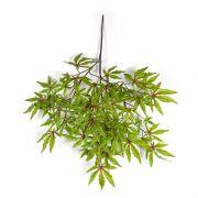 Fausse branche d'érable du Japon ALEXANDER, vert clair-rouge, 60cm
