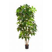 Schefflera synthétique COOPER, vrais troncs, vert, 220cm