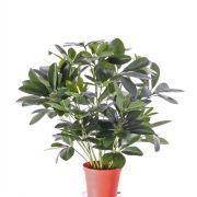 Schefflera synthétique LUKAS en pot décoratif, vert, 55cm