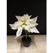 Poinsettia artificiel MOENA en boule de terre, blanc, 18cm, Ø16cm