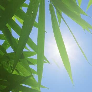 Plantes artificielles résistantes aux UV